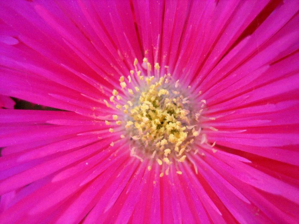 Un'esplosione in rosa....