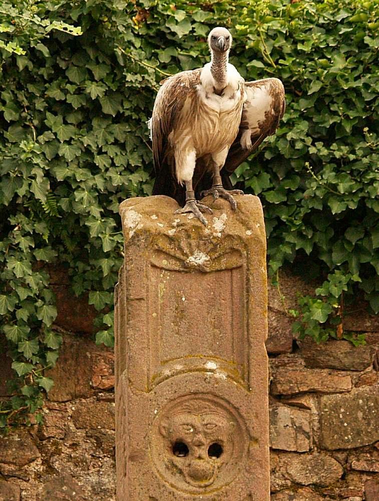 Ungewöhnliche Brunnenstatue...