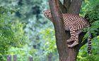 Ungewöhnlicher Baumbewohner! ;-)
