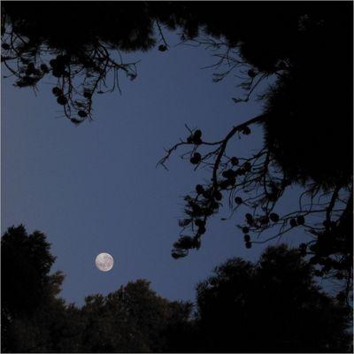 Ungewöhnlicher Mond