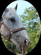 Ungezogenes Pferd