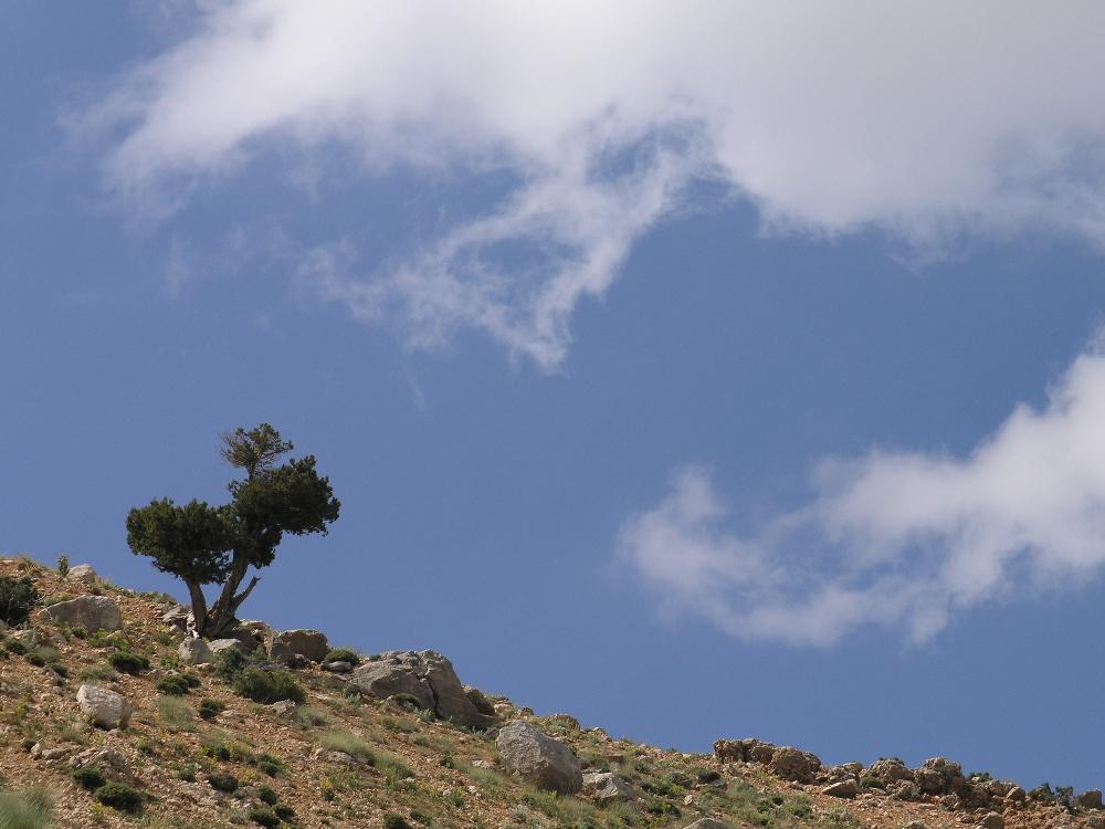 Unglaublich: Wolke frisst Baum