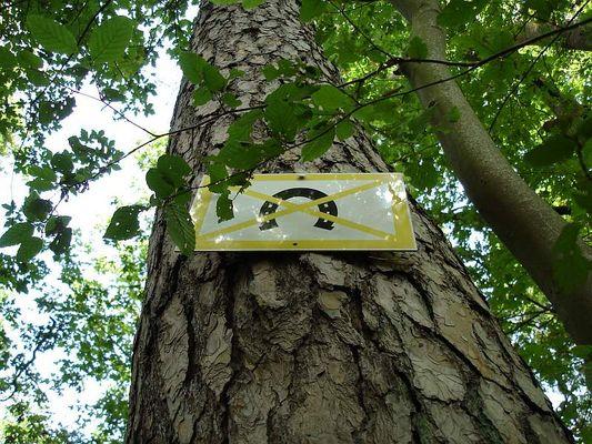 Unglücksbaum?