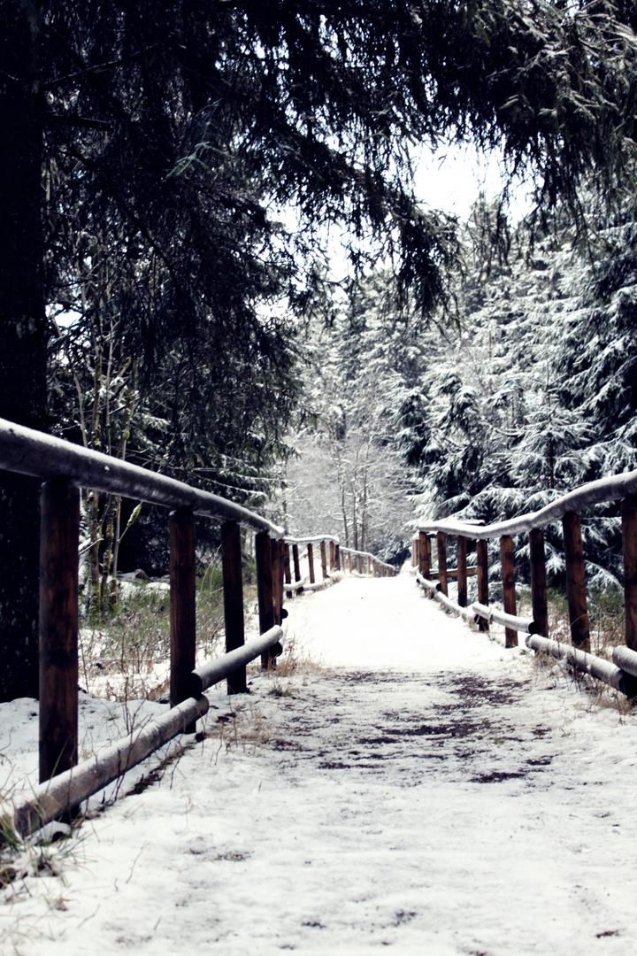unheimliche Stille im Harz