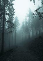 Unheimlicher Abstieg vom Hörnle