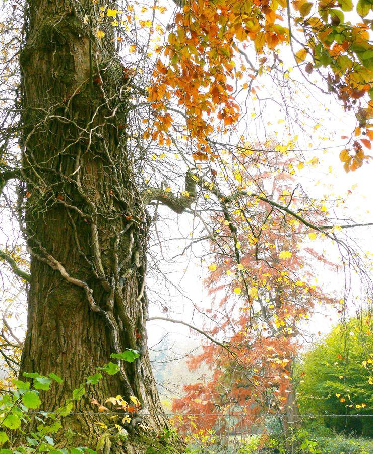 Unheimlicher Herbst