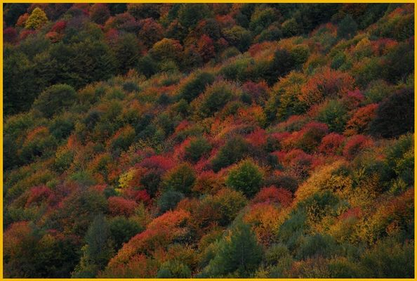 United autumnal colours