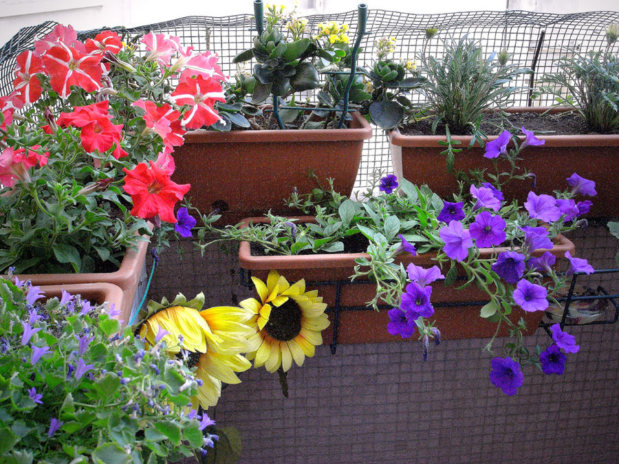 UNITED COLORS OF... MY BALCONY!