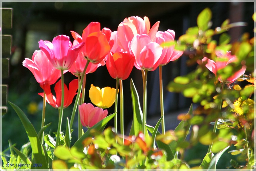 United Colors of Spring