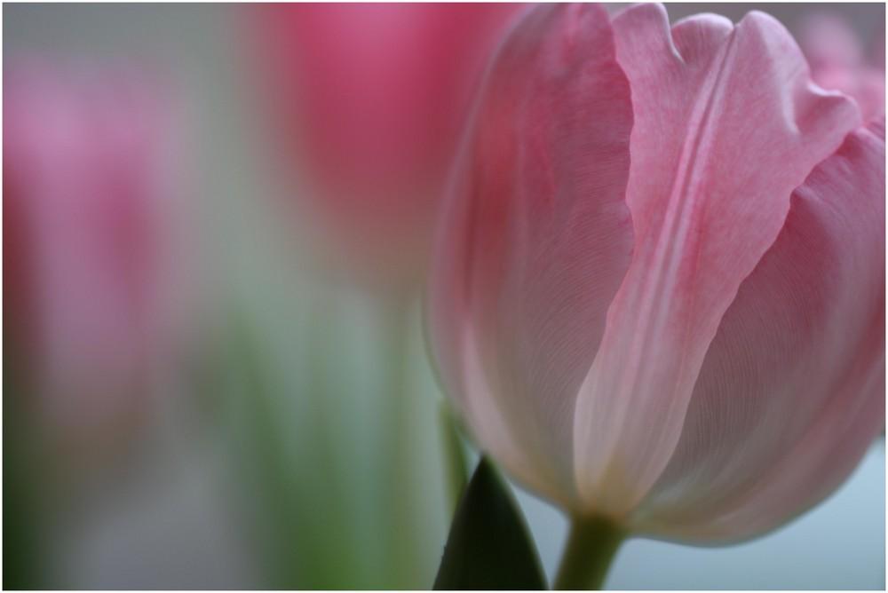 UNKLAR - wann endlich der Frühling kommt...