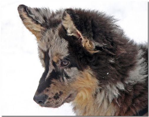 Uno spettatore alle corse auto sulla neve-Almeno lui aveva la pelliccia