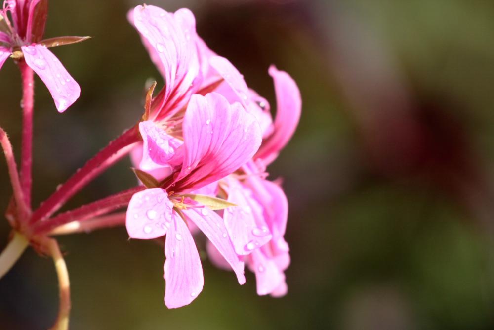 Unpretty in pink