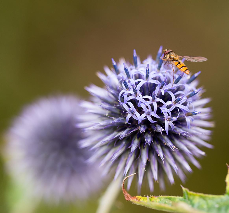unscharfe Blüte