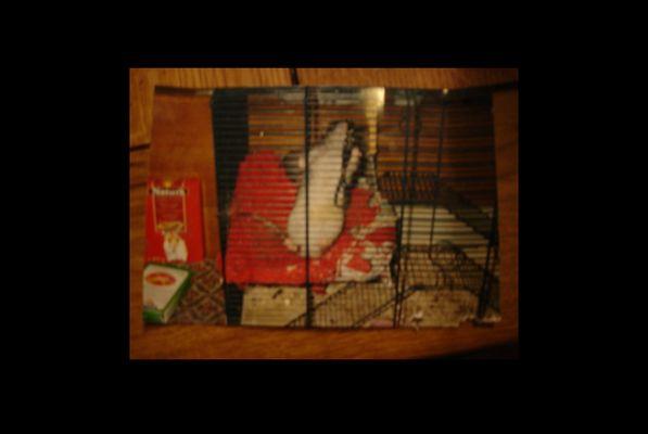 Unscharfes Foto von einem Foto von einer in einem Käfig eingesperrten Ratte
