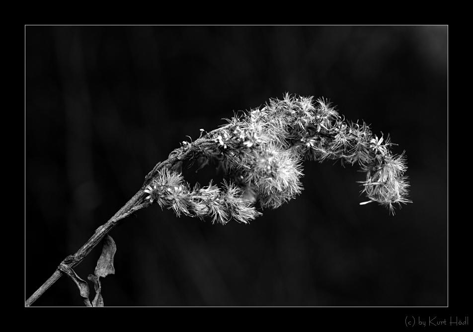 Unscheinbare Blütenbracht...