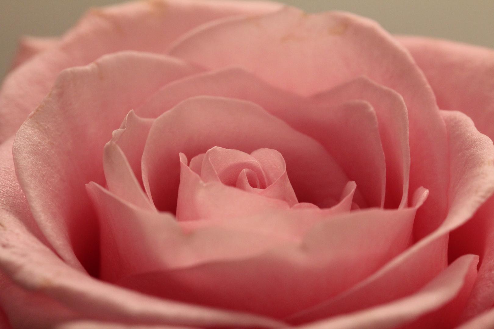 Unschöne Kanten bei schöner Blume
