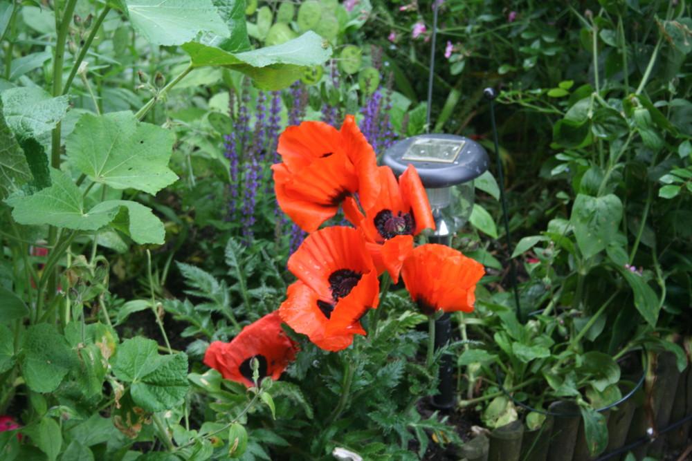 unse Garten