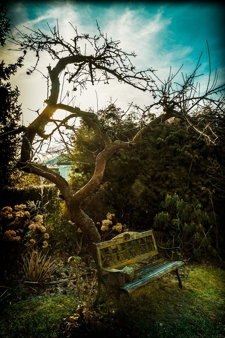 ... unser apfelbaum in der frühe ...