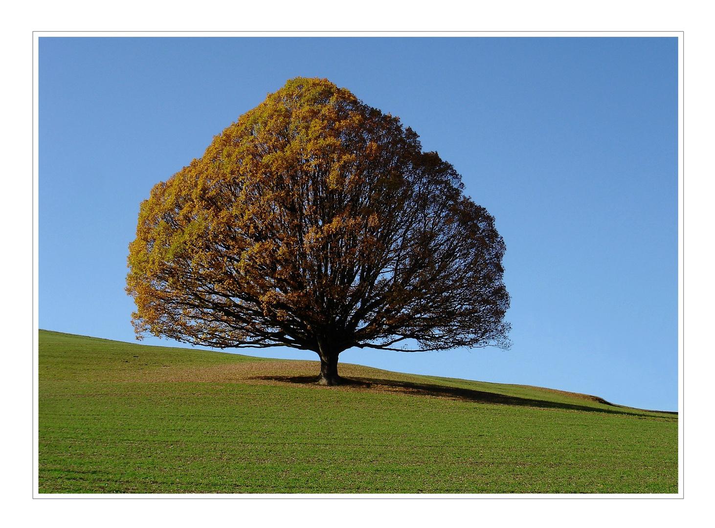 Unser Baum im Herbst