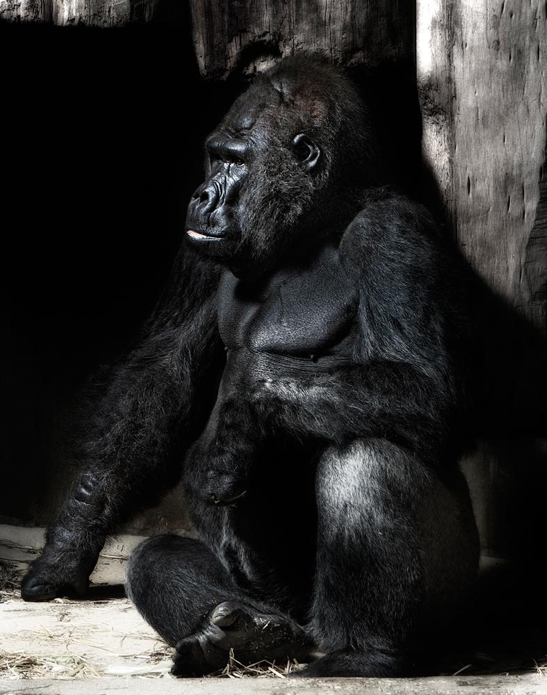 Unser Chef im Zoo