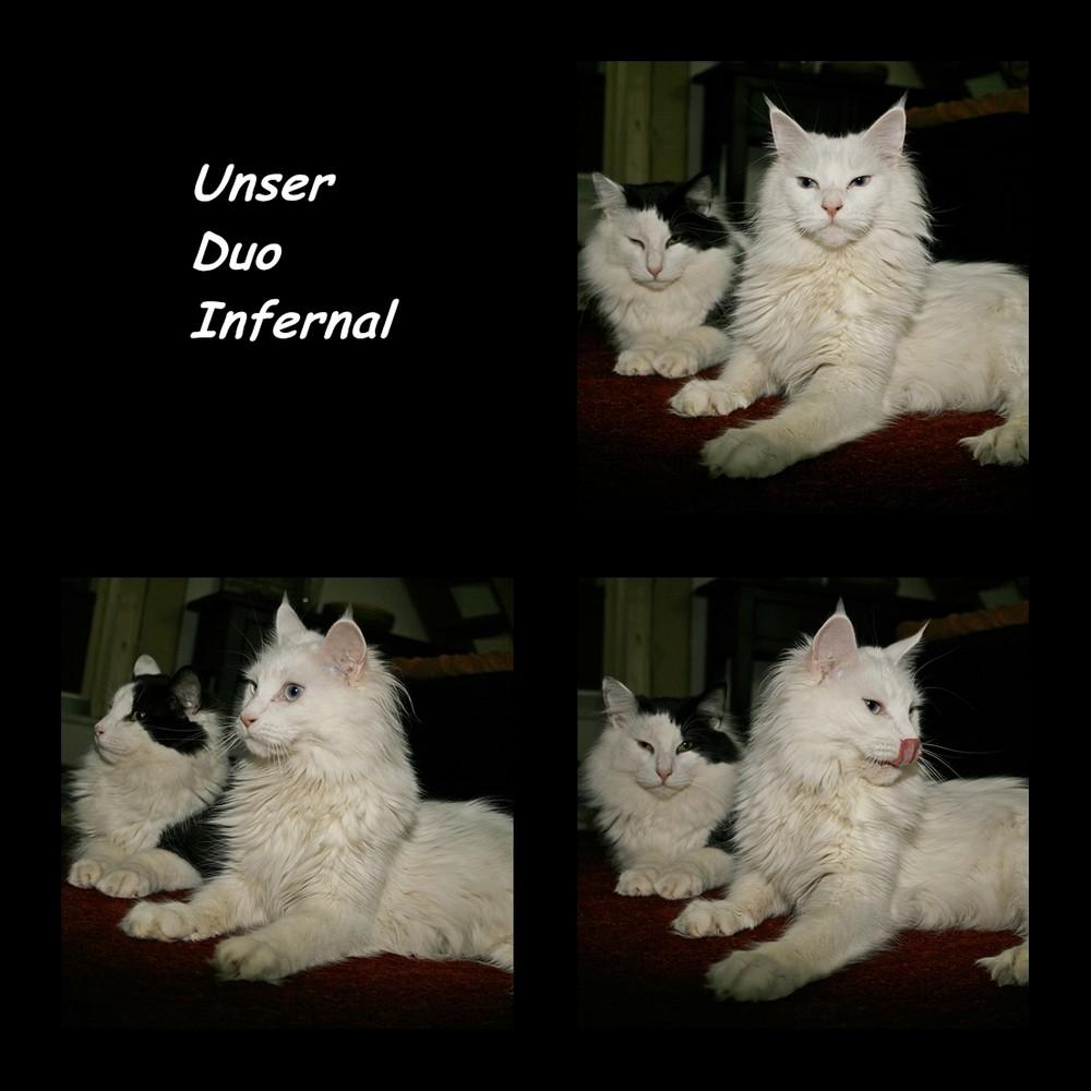 Unser Duo Infernal Monty und Watson :-)))