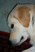 Unser erster Hund namens TEDDY