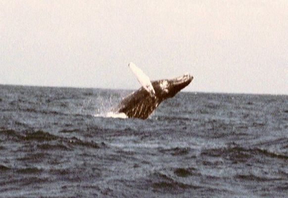 Unser erster Wal