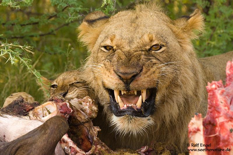 Unser Fleisch bekommst DU nicht !!