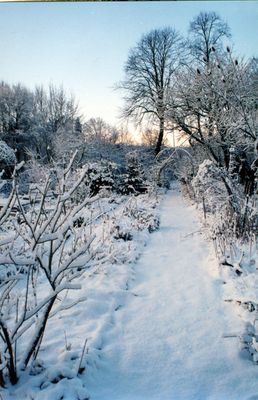 Unser Garten im Winter und mein erstes Foto hier =)