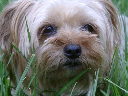 Unser Hund 2