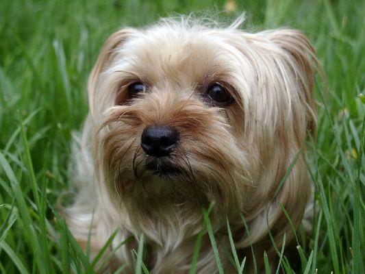 Unser Hund 3