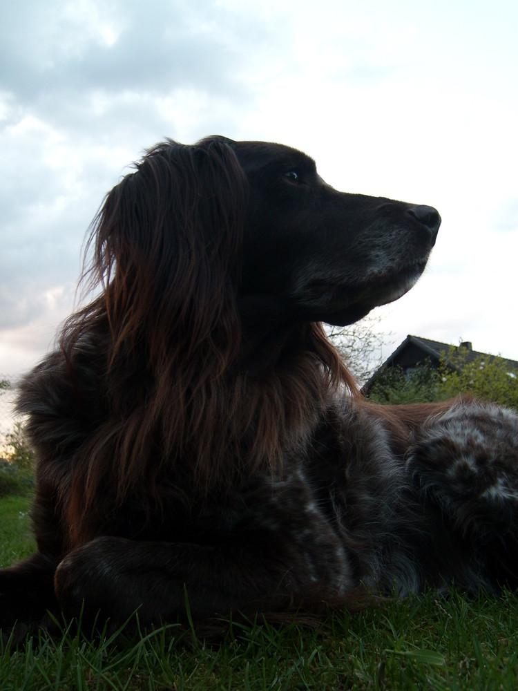 Unser Hund Aika