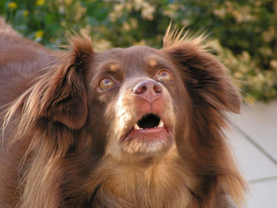 Unser Hund beim Beobachten von Spatzen auf dem Dach...