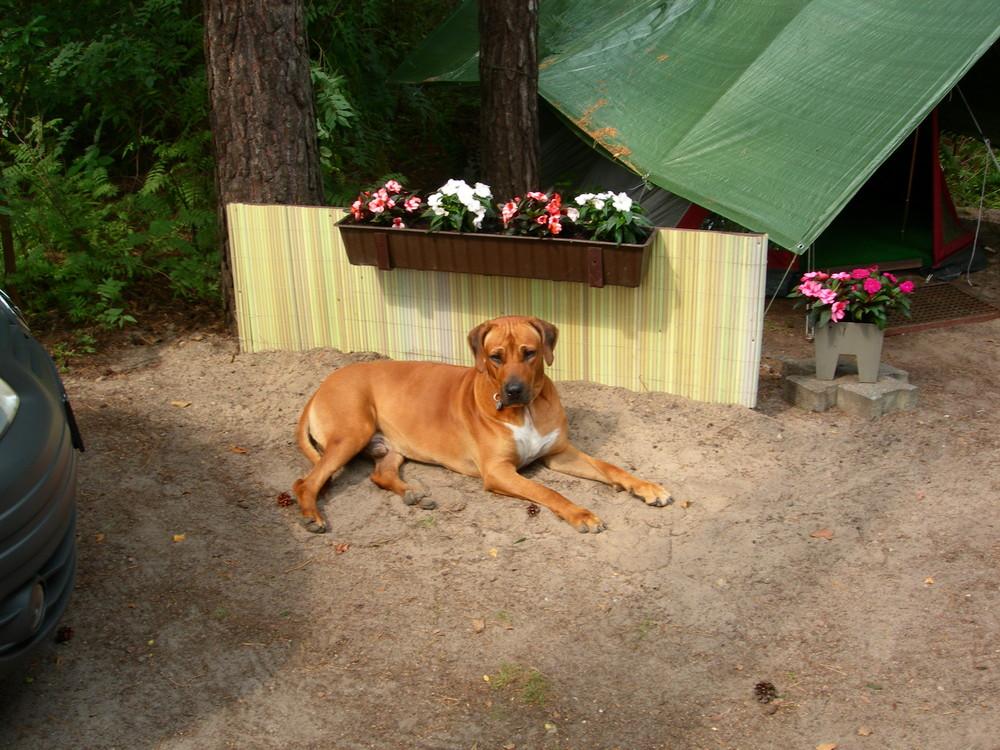 Unser Hund Cliff