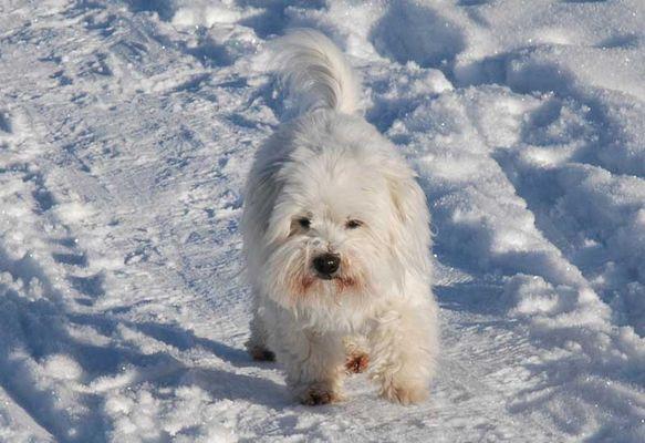 """Unser Hund """"Einstein"""" im Schnee"""