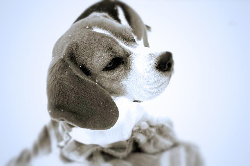 Unser Hund im Winter