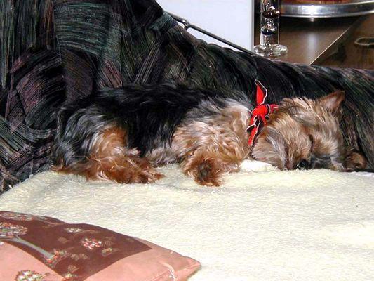 Unser Hund Kathi