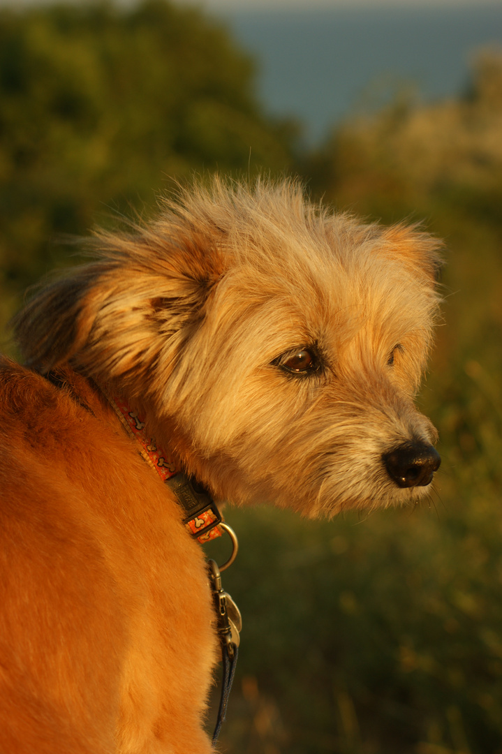 unser Hund Mickey