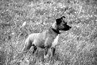 Unser hund toni2