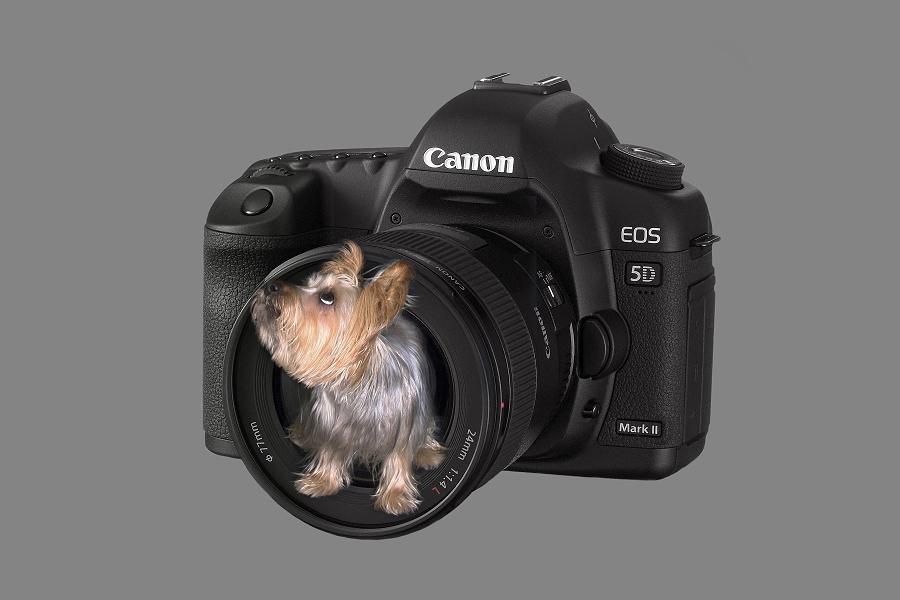 unser kamera-assistent...;)