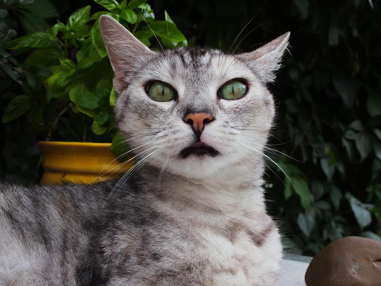 Unser Katze Medi