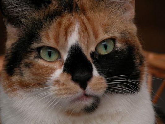 Unser Katzen-Modell Vanessa :-)