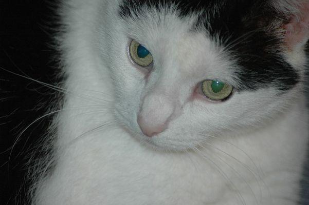 Unser Katzenliebling 1