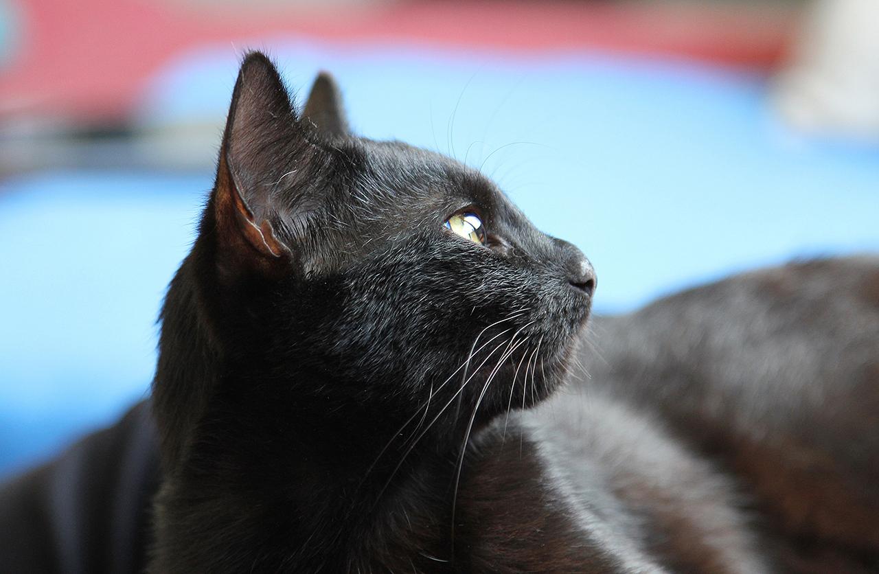 Unser Katzennachwuchs #3