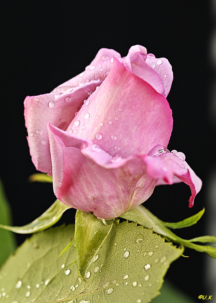 unser Mittwochsblümchen