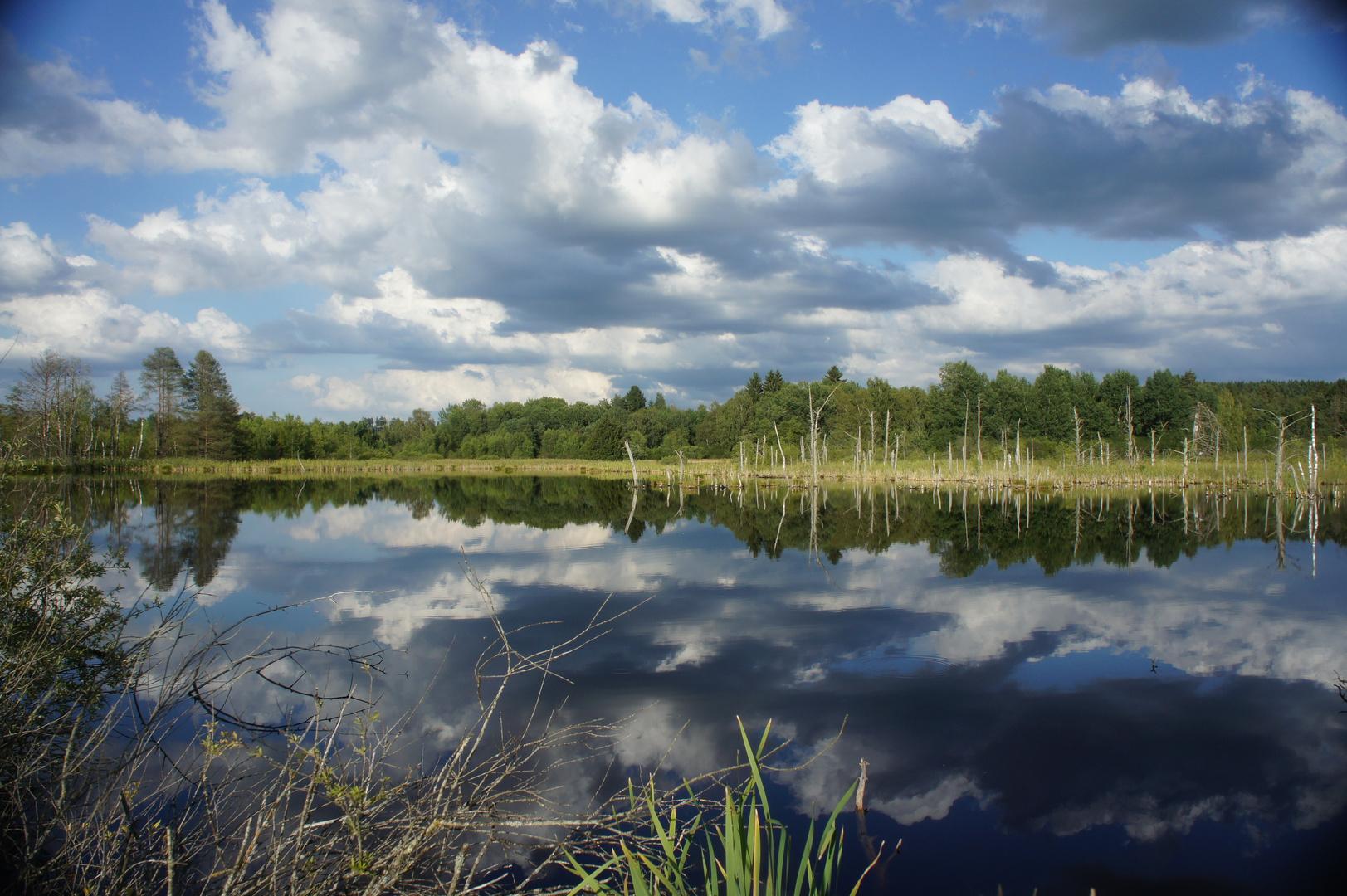 Unser Moos des Neckars Ursprung