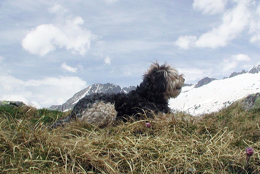 unser Murmeltierhund