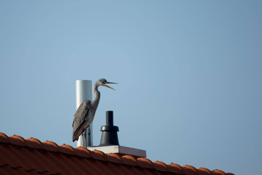 Unser Nachbar hat einen Vogel