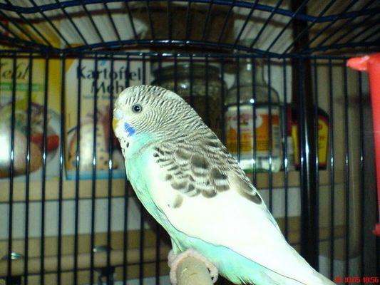 Unser neuer Vogel
