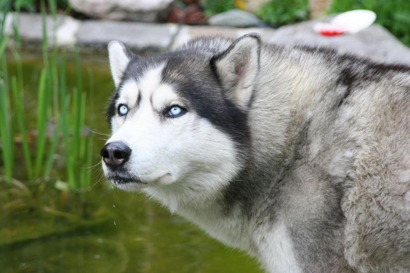 Unser Pflegehund Carlo